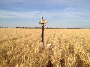 wheat_adcon_pivot