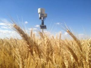 wheat_adcon